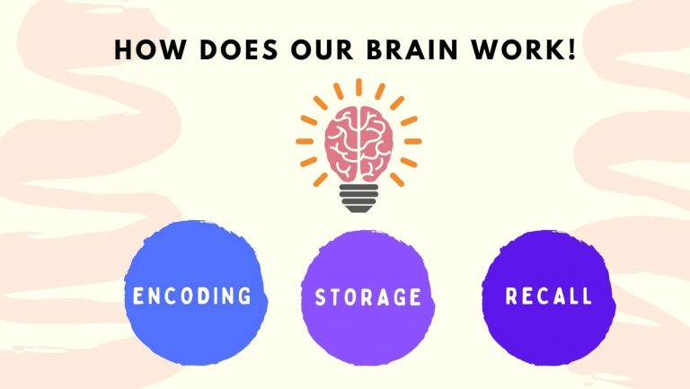 How does brain work - Memorization techniques for studying